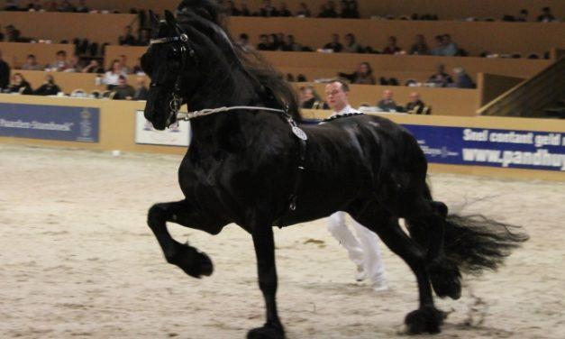 Hevosalan ammattilaiseksi?