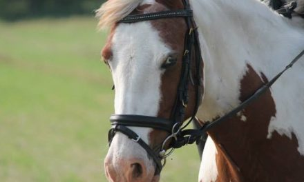Hevosen perusarvot