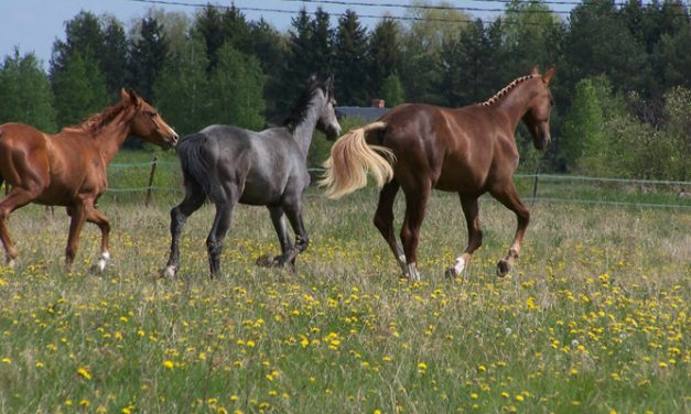 Opettele ajattelemaan kuten hevonen