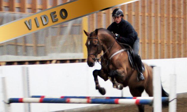 Kari Nevalan estetreeni – kaarteiden ratsastusta