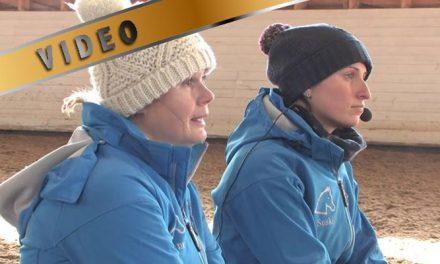 Miten Hattel Horsen ammattilaiset suunnittelevat kilpailukautta?