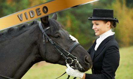 LiveTV tallenne Laatuarvostelu finaali kouluhevoset lauantai sekä sunnuntailta 6 parasta ratsukkoa