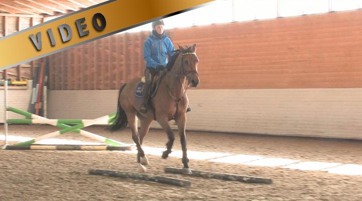 Sanna Backlund, työskennellään hevonen sileällä suoraksi