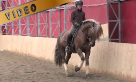 Notkea ja joustava hevonen kahdessa viikossa, viikko 1