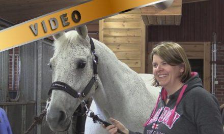 Hevoshierojan työ
