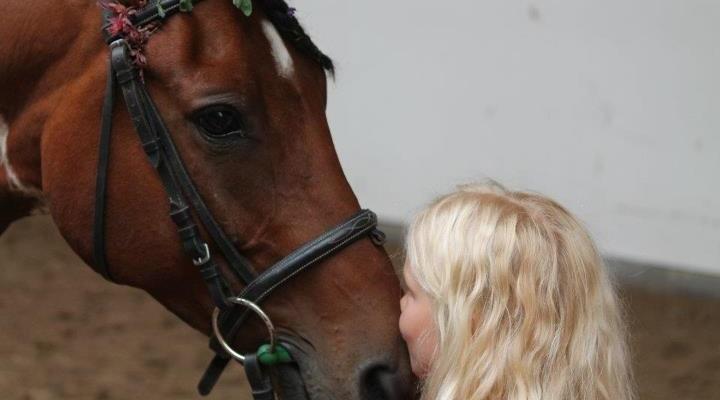 Hevoseni yskii, mutta ei ole muuten kipeä, mitä tehdä?