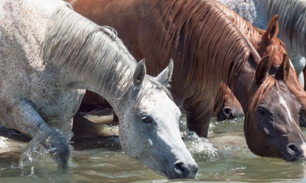 Voit viedä hevosen lähteelle, muttet voi pakottaa sitä juomaan