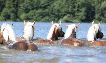 Hevosen viilentäminen ratsastuksen jälkeen – 16 vinkkiä hellesäähän!