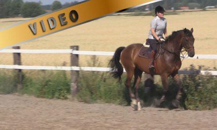 Harjoituksia kohti ratsastuksenohjaajan välikoetta, veryttely