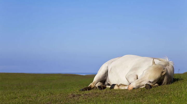 Hevosen lämpöhalvaus – Tunnista oireet ajoissa