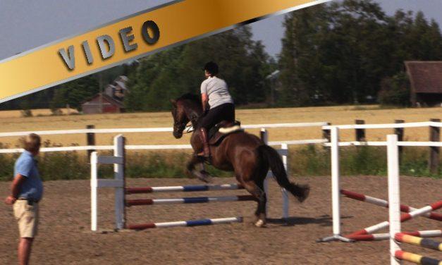 Harjoituksia kohti ratsastuksenohjaajan välikoetta, sarja ja alkurata