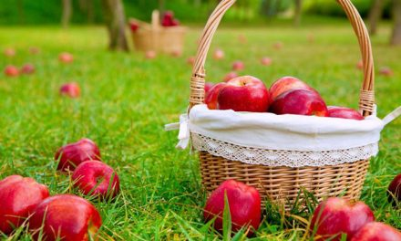 Kuivattuja omenaherkkuja hevosille ja 10 muuta vinkkiä omenien syöttöön
