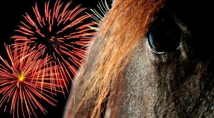 Hevonen ja raketit