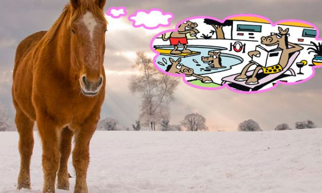 Tarvitseeko hevoseni talvitaukoa? Osa 1