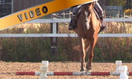 Puomikoulu 2 – Suora hevonen