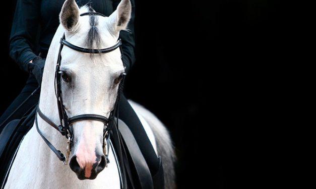 10 vinkkiä hevosen koulutustason nostoon