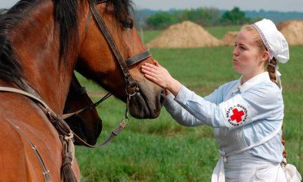 Huippugroomit – Vinkit pikkuhaavojen ja naarmujen hoitoon