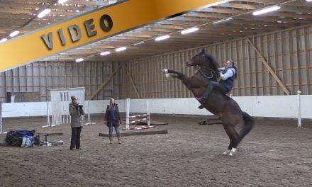 Marcin Mach – Tie hevosen ja ihmisen väliseen luottamukseen II
