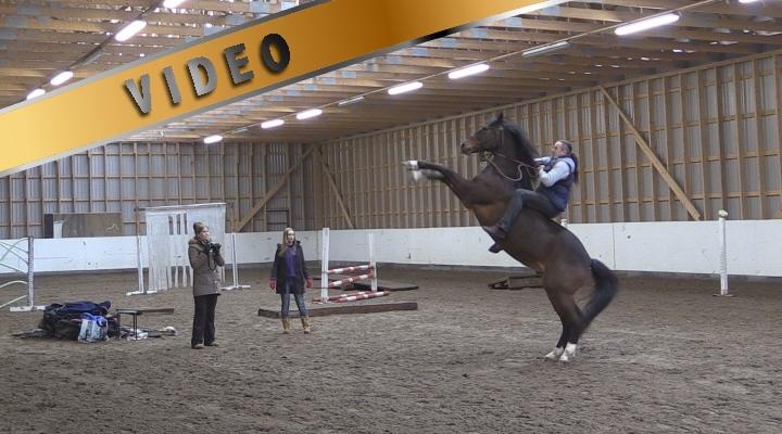 Marcin Mach – Tie hevosen ja ihmisen väliseen luottamukseen VI