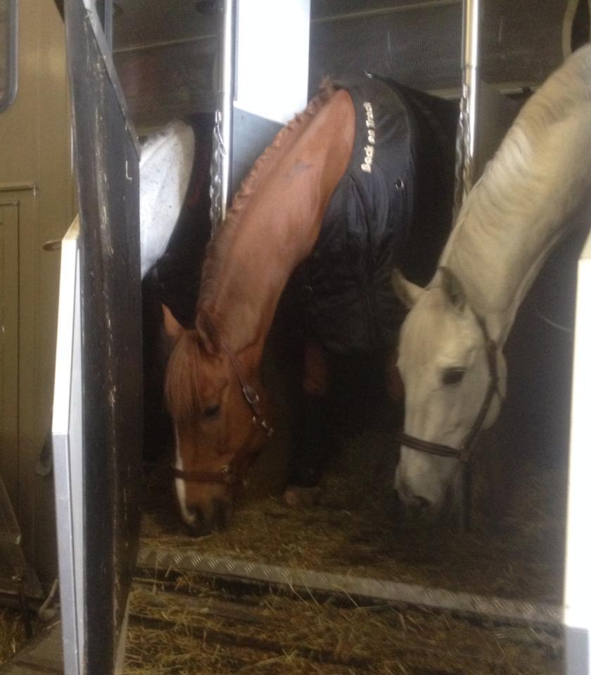 Hevoset matkustivat hyvin.