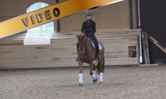 Hermostuneen ja jännittyneen hevosen ratsastaminen – treenivideot Anna von Wendt
