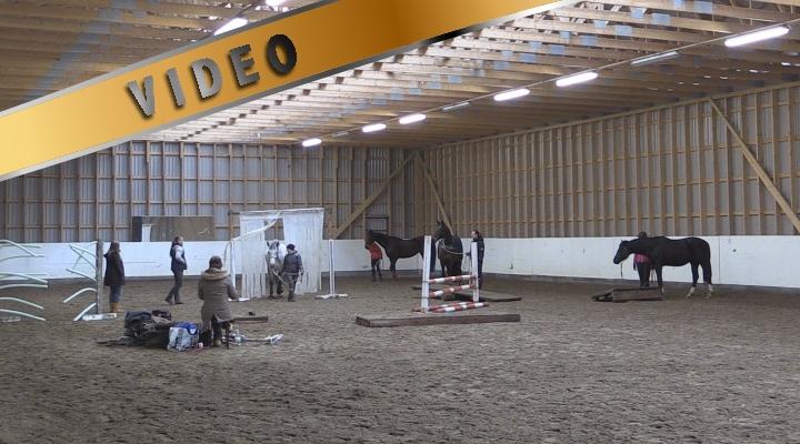 Marcin Mach – Tie hevosen ja ihmisen väliseen luottamukseen V