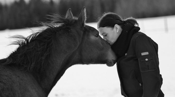 Hevosen inhimillistämisestä