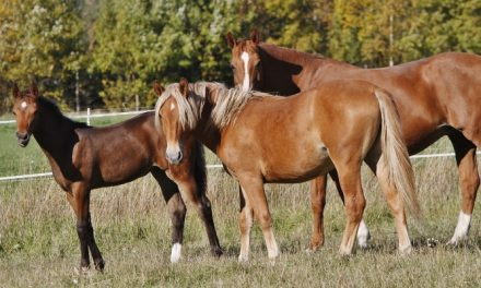 Onko hevosella tunteet?