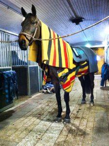 Hevonen pidetään villaloimien avulla lämpimänä, samalla kun se saa Bemer hoitoa. Hevosille onkin nykyisin paljon erilaisia hoitolaitteita lihasten hoitoon: laser, magneetti, bemer...