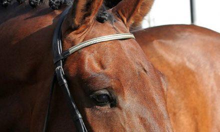 Ninan vinkit hevosen päivittäiseen lihashuoltoon