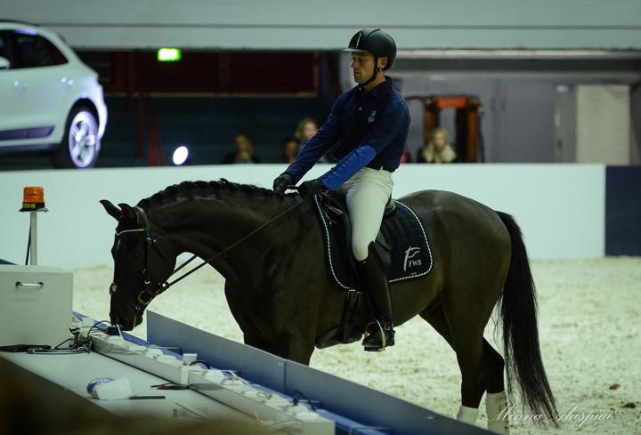 4YourHorsen Dr.McLeanin demossa nuoret 4-vuotiaat hevoset ihmettelivät suurta Jäähallin areenaa.