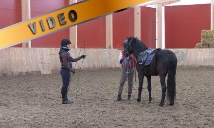 Nuoren hevosen opetus juoksutukseen