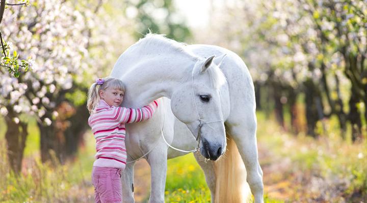 Michel Robert – Parempi suhde hevoseen maasta käsin