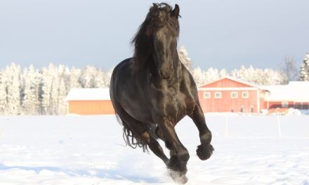 Hevosen veden juominen kylmillä säillä, kuivumisvaara?