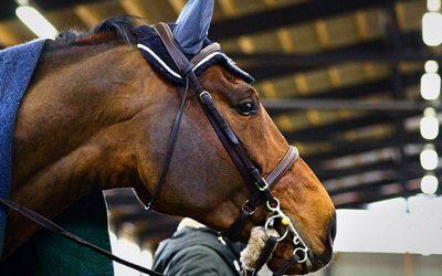 Kuuman hevosen treeni – Kilpailuissa