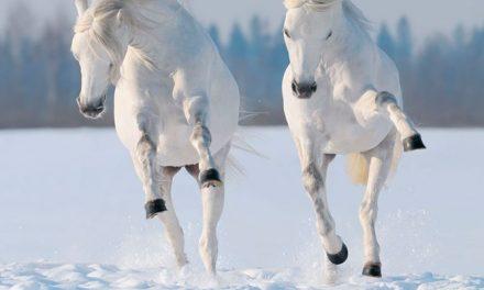 Kuinka kylmällä voi ratsastaa?