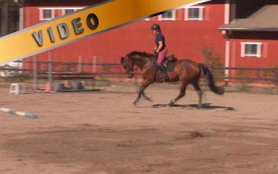 Kuuman hevosen treeni – Verryttely