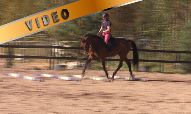 Kuuman hevosen treeni – Ravipuomit