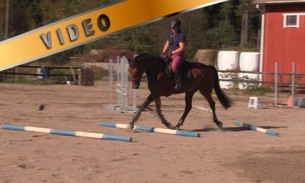 Kuuman hevosen treeni – Laukkapuomit