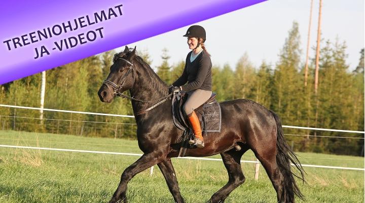 Nuoren hevosen koulutus ja treenaaminen