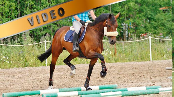Kuuden puomin kolme tehtävää – Kuuma hevonen