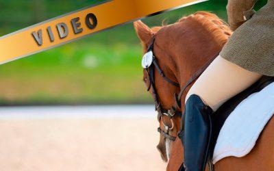Nuoren hevosen ratsastaminen käynnissä – Anna von Wendt